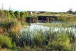 Imatge dels aiguamolls